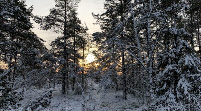 Preppern som gick till skogs